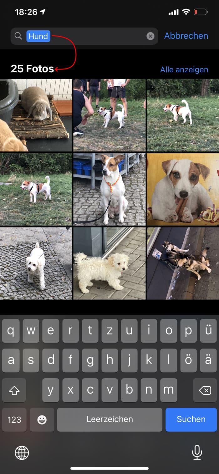 Tipps iPhone - Fotosuche - Beispiel Hund